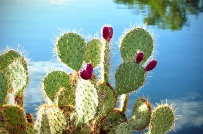 cactus-76504_960_720
